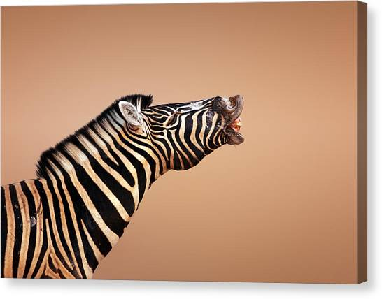 Mouth Canvas Print - Zebra Calling by Johan Swanepoel