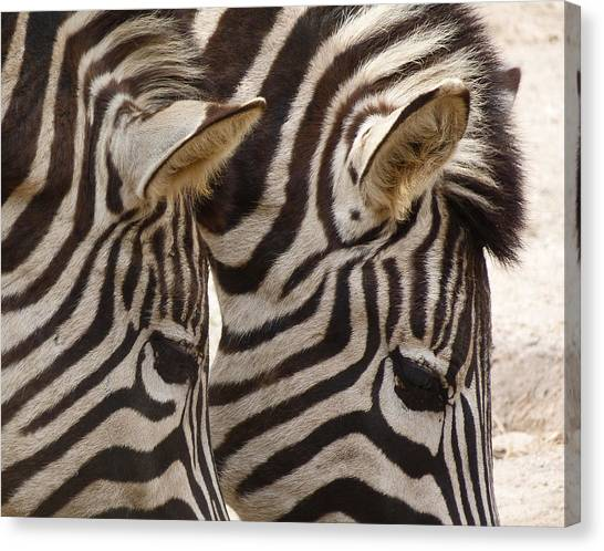 Zebra Double Canvas Print