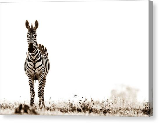 Zebras Canvas Print - Zebra Facing Forward Washed Out Sky Bw by Mike Gaudaur