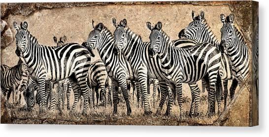 Zebra Herd Rock Texture Blend Canvas Print