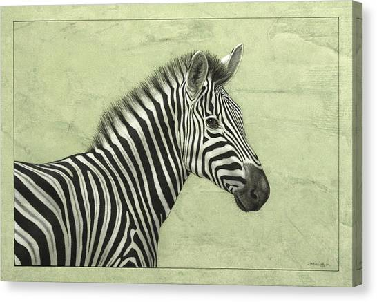 Zebras Canvas Print - Zebra by James W Johnson