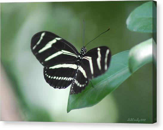 Zebra Longwing Butterfly A Quite Moment Canvas Print