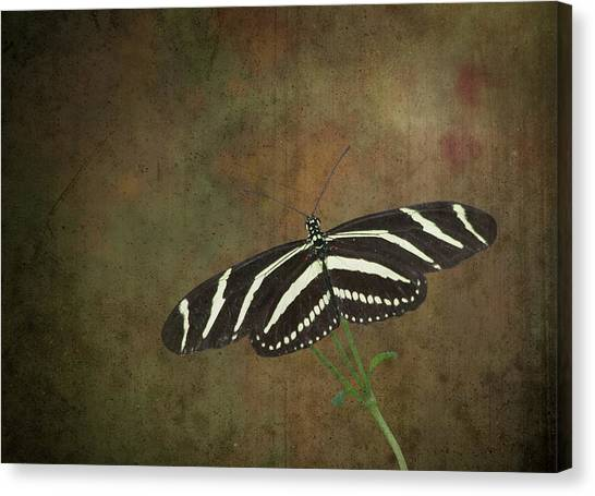 Zebra Longwing  Butterfly-1 Canvas Print