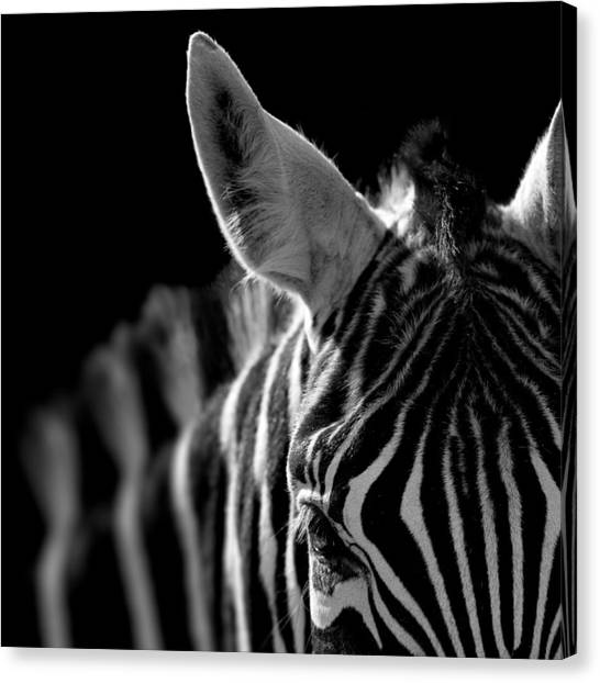 Zebras Canvas Print - Portrait Of Zebra In Black And White by Lukas Holas