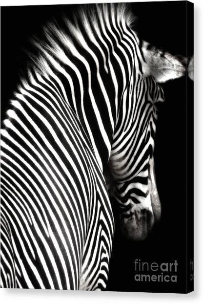 Zebra On Black Canvas Print