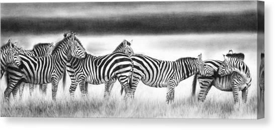 Zebra Panarama Canvas Print