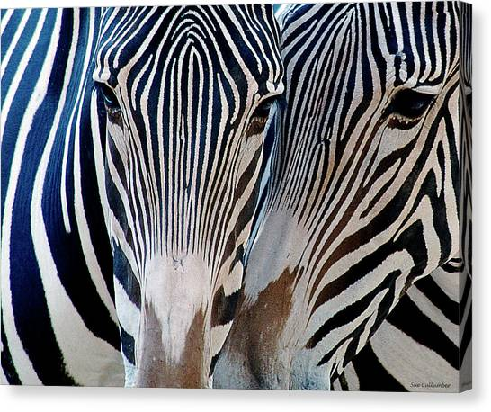 Zebra Pattern Canvas Print