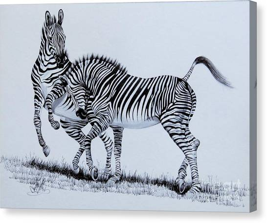 Zebra Play Canvas Print