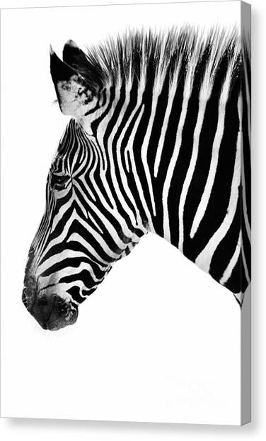 Zebra Profile Black And White Canvas Print