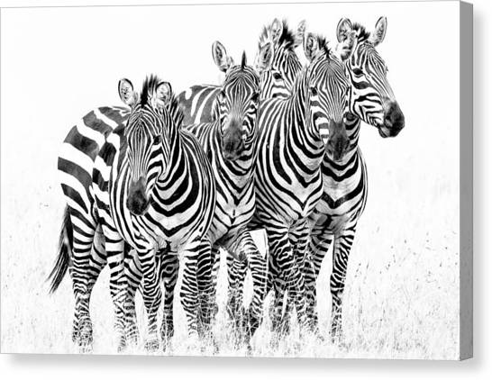 Zebras Canvas Print - Zebra Quintet by Mike Gaudaur