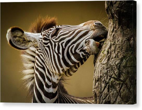 Camouflage Canvas Print - Zebra by Silvia Geiger