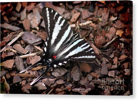 Zebra Swallowtail Butterfly Canvas Print