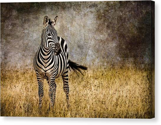 Kenyan Canvas Print - Zebra Tail Flick by Mike Gaudaur