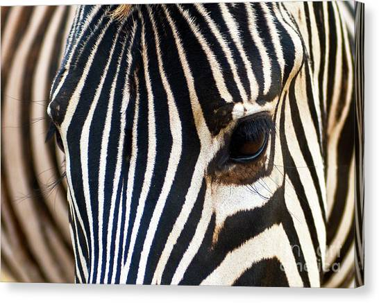 Zebra Vibrations Canvas Print