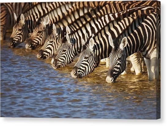 Environment Canvas Print - Zebras Drinking by Johan Swanepoel