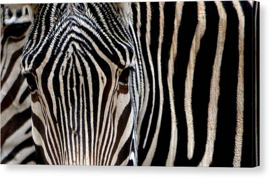Op art canvas prints page 34 of 105 fine art america op art canvas print zebras face to face by nadalyn larsen altavistaventures Gallery