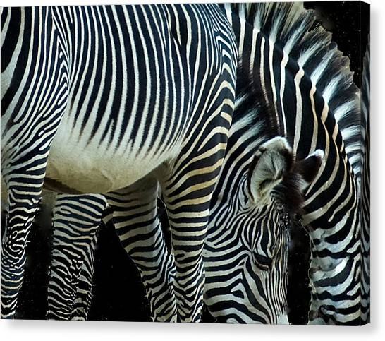 Canvas Print featuring the photograph Zebras by Mae Wertz