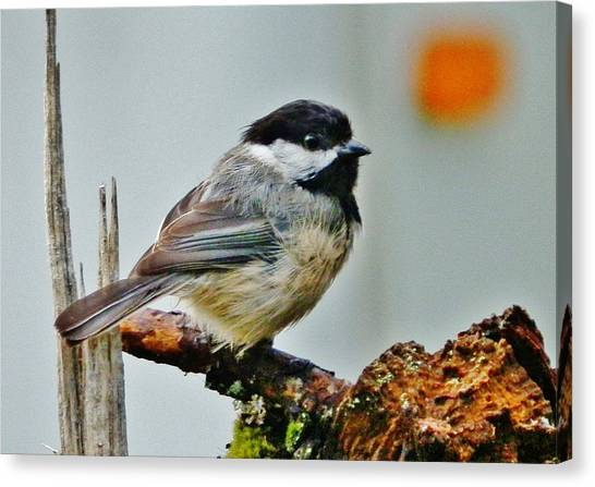 Zen Chickadee Canvas Print