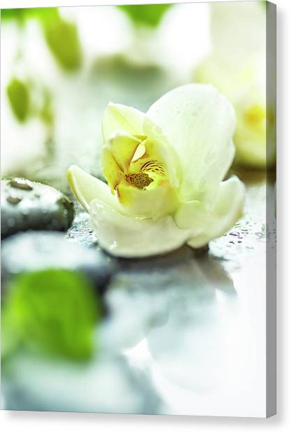 Orchids Canvas Print - Zen Orchid by #name?