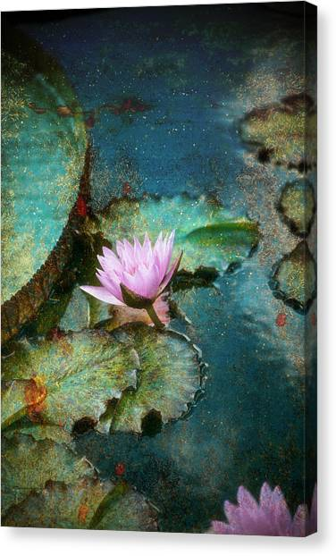 Zen Water Lily Canvas Print