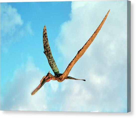 Pterodactyls Canvas Print - Zhenyuanopterus by Walter Myers