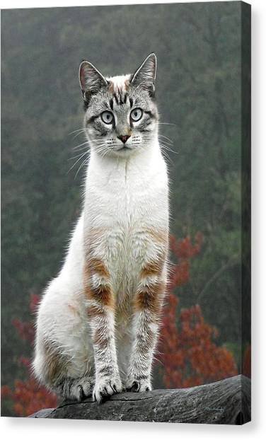 Zing The Cat Canvas Print