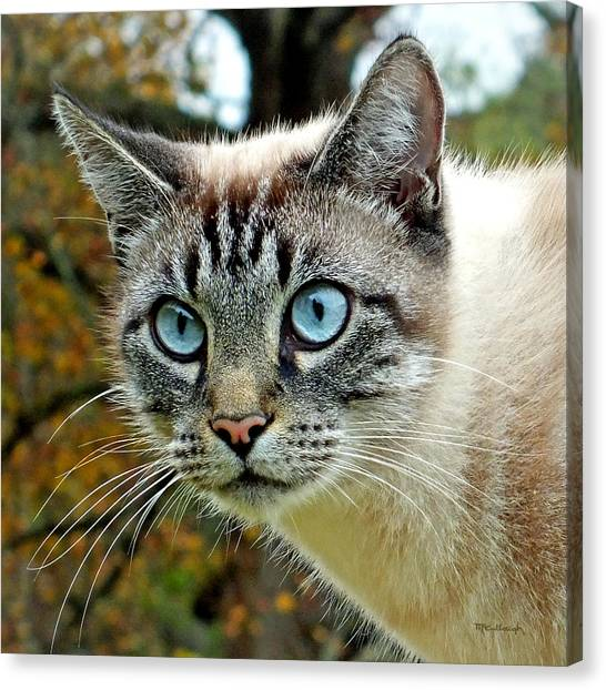 Zing The Cat Upclose Canvas Print