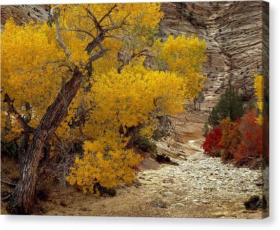 Zion National Park Autumn Canvas Print