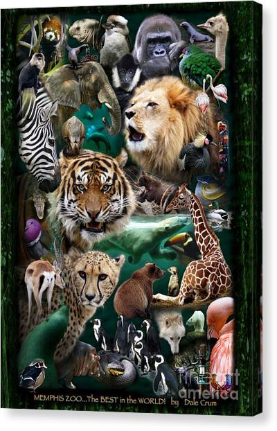 University Of Memphis Canvas Print - Zoo Collection by Dale Crum