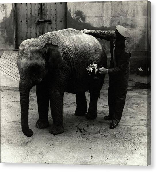 Zoo Keeper Cleaning Burma Canvas Print