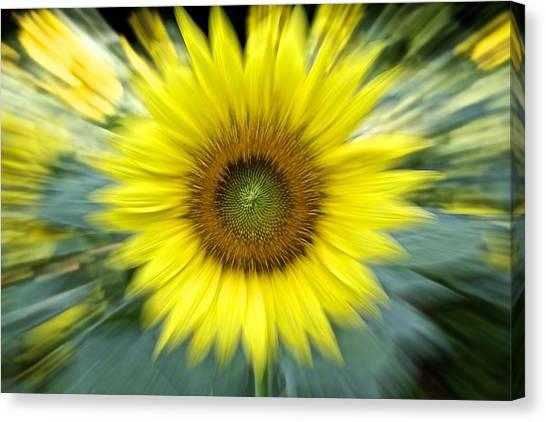 Zoom Sunflower Canvas Print