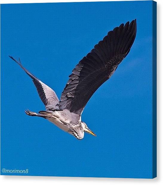 Herons Canvas Print - 飛んでいく 大空を by Morley🇯🇵♂ もーりー∞♂