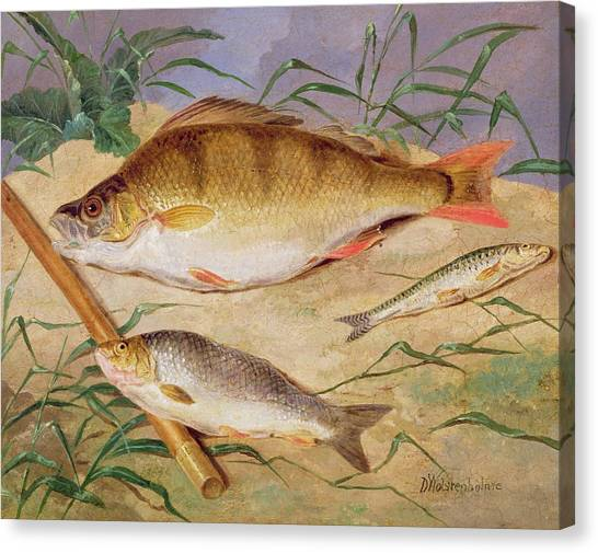 Angling Canvas Print -  An Angler's Catch Of Coarse Fish by D Wolstenholme