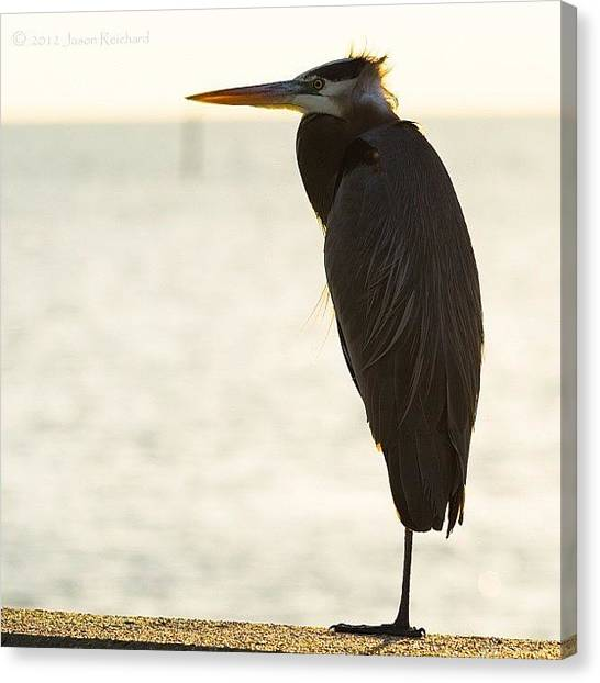 Herons Canvas Print - 🎶 And I Find That I'm Never Alone; by Jason Reichard