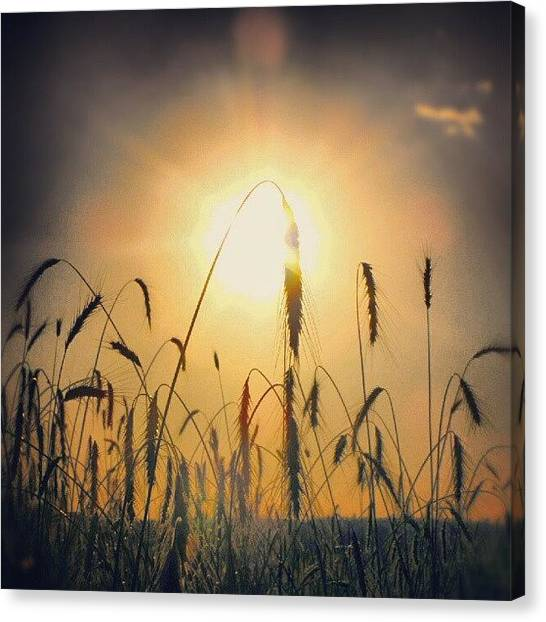 Harvest Canvas Print -  #beauty Is In The Heart Of The by Alexandra Cook
