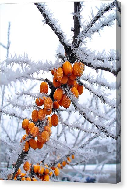 Berries And Frost Canvas Print