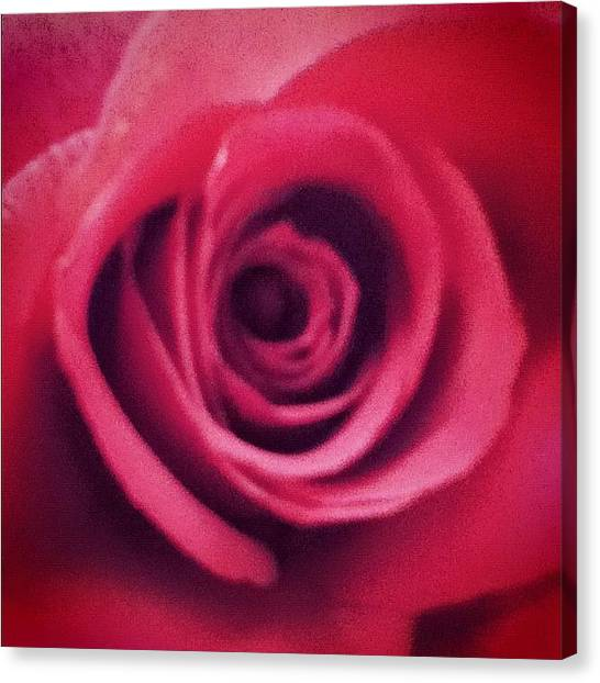 Spiral Canvas Print -  #closeup #rose #spiral #red #beauty by Brookiee 