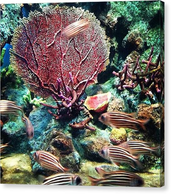 Underwater Canvas Print - 🌊 Coral 🐟🐠 by Nancy Nancy