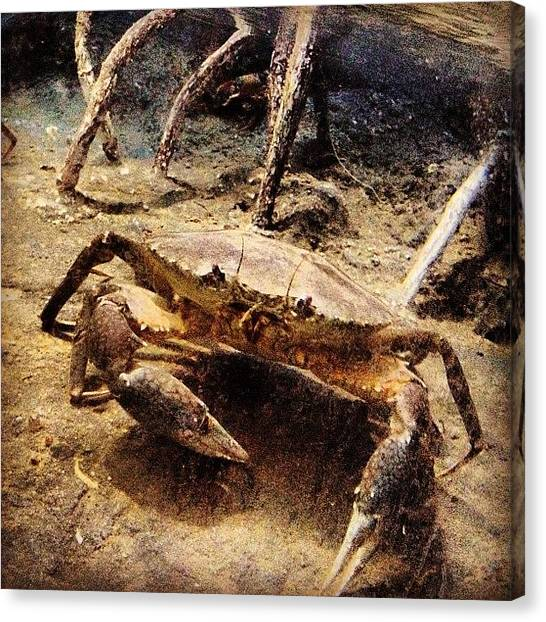 Underwater Canvas Print - 🌊 Crab☝😁 by Nancy Nancy