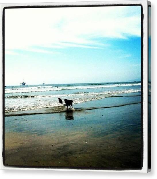 Ocean Animals Canvas Print - :) #dog #beach #water #sun #california by Elisa B