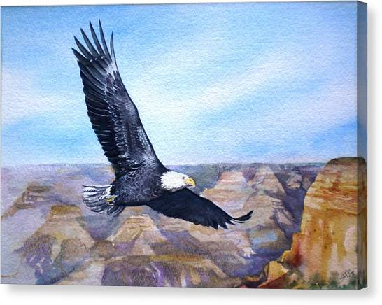 Eagle   American Bald Eagle Canvas Print