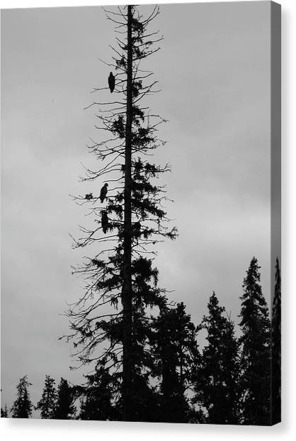 Eagle Silhouette - Bw Canvas Print