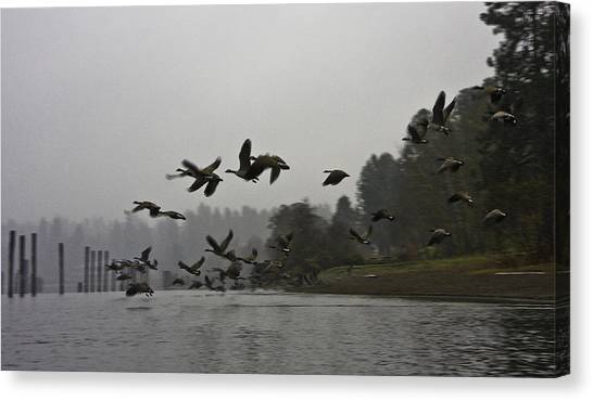 Fall Migration Lake Cd'a Idaho Canvas Print by Grover Woessner