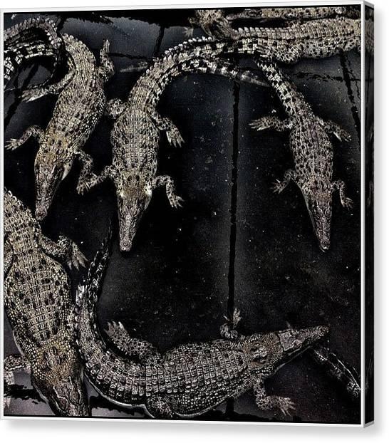 Reptiles Canvas Print - ... Future Gucci Handbags ... Hartleys by Brian Cassey