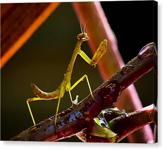 Guardian Of The Rose  Canvas Print by Michael Putnam