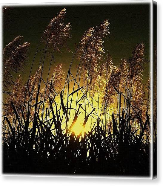 Harvest Canvas Print - ... Liquid Gold ... Sugar Cane Harvest by Brian Cassey