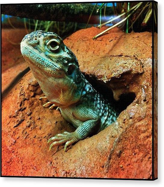 Dragons Canvas Print - ... Pic 2 From Today At Cairns Tropical by Brian Cassey