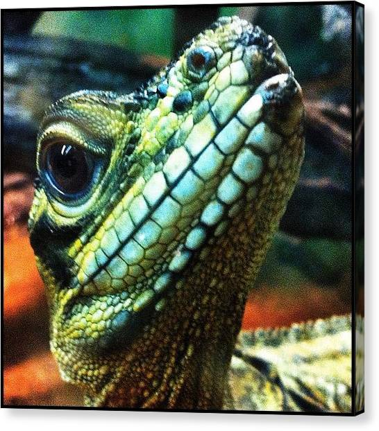 Lizards Canvas Print - ... Pic 5 Today At Cairns Tropical Zoo by Brian Cassey
