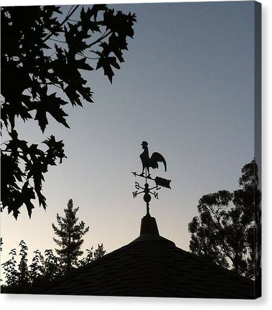 Roosters Canvas Print - [ #rooster 🐔 #rooftop #weathervane by Ink Blue