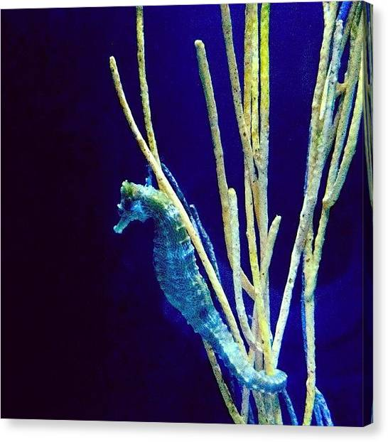 Aquariums Canvas Print -  by Samantha Jeanne